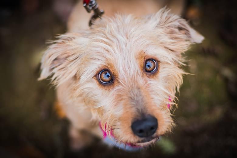 PsyNadpsute jedzenie leżące na ulicy, jeśli zostanie zjedzone przez psa, może doprowadzić do jego zatrucia. Najgroźniejsze są kości, szczególnie drobiowe.