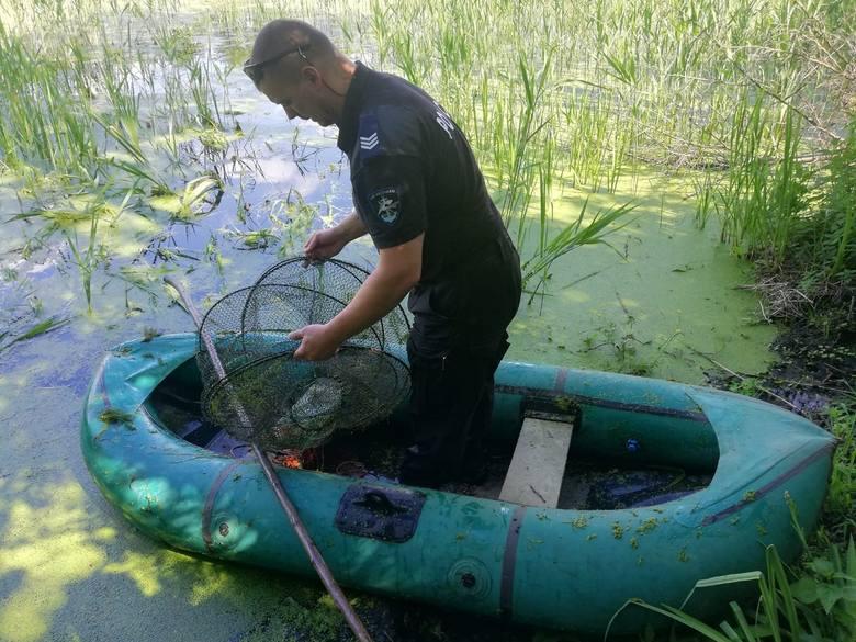 Podczas wspólnej służby mundurowi funkcjonariusze włocławskiej policji i Państwowej Straży Rybackiej namierzyli mężczyznę, który wypłynął pontonem na