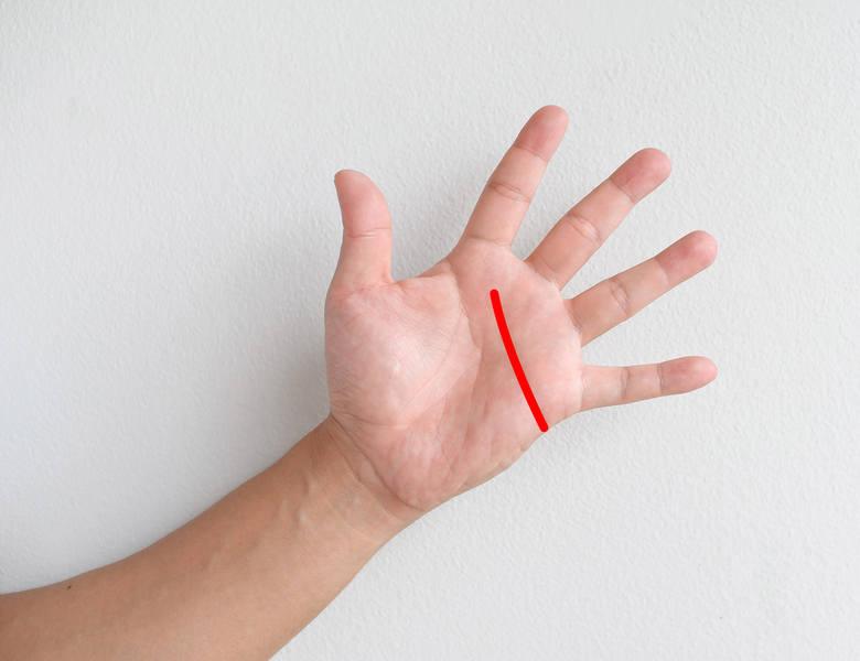 LINIA SERCANależy do linii głównych, jest trzecią najbardziej wyraźną linią na dłoni.Odzwierciedla wrażliwość, stan emocjonalny i życie duchowe. W przypadku,