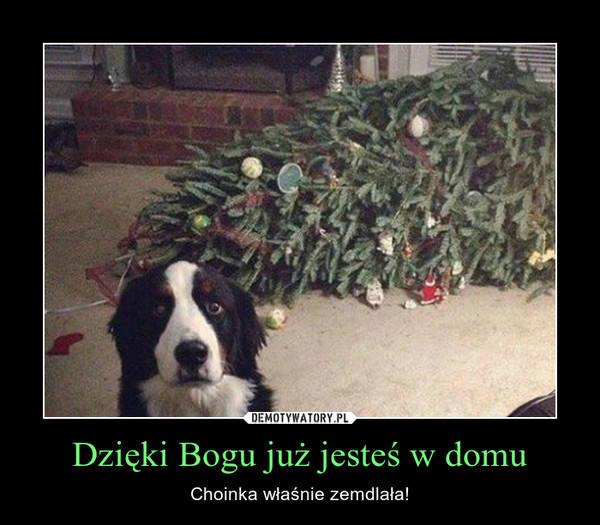 Internauci, jak co roku, żartują ze świątecznej atmosfery. Jakie memy i demotywatory stworzyli? Zobacz świąteczne obrazki!Zobacz też: Życzenia świąteczne.