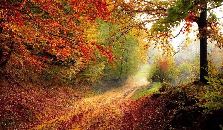 Pierwszy dzień jesieni 2019. Dni są wyraźnie coraz krótsze i zimniejsze, a to znak, że nadchodzi do nas szybkimi krokami jesień. Kolejna pora roku rozpocznie