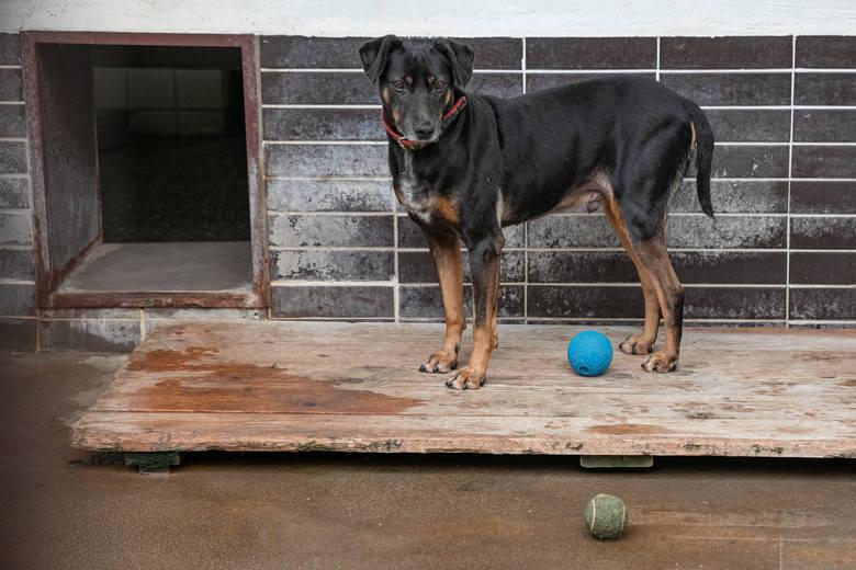 W naszym regionie w schroniskach dla bezdomnych zwierząt mieszka tysiące psów i kotów Zobacz kolejne zdjęcia. Przesuwaj zdjęcia w prawo - naciśnij strzałkę