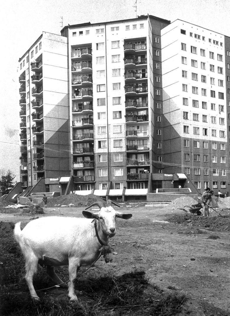 Konie w centrum Wrocławia. To były czasy [Z ARCHIWUM]