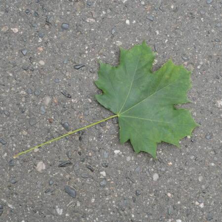 23 września świętujemy Dzień Spadającego Liścia