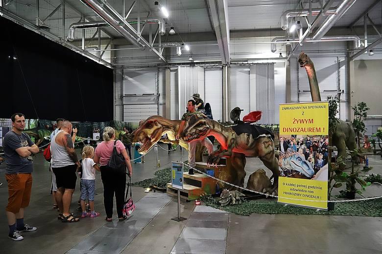 Łódź Dino Expo. 35 dinozaurów w Hali Expo. Zobaczcie zdjęcia!