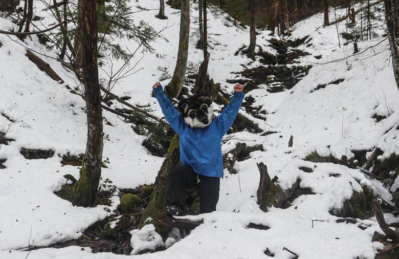 Wilczyce blokują wycinkę starodrzewia w Mucznem w Bieszczadach.