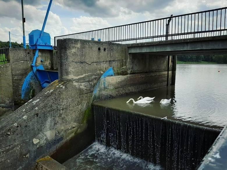 Masakra ryb i małży, bo opróżnili zalew. Miasto zgłosi to do prokuratury? (ZDJĘCIA)