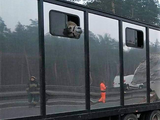 Wypadek na autostradzie A1: w gęstej mgle autobus pełen turystów wjechał w wóz cyrku Arena ze zwierzętami
