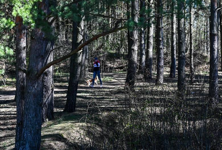 Po zniesieniu części ograniczeń w lasach można spotkać wielu spacerowiczów