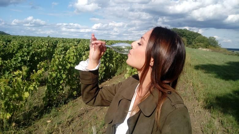 W Polsce odradzają się tradycje winiarskie. Na zdjęciu winnica Gostchorze w województwie lubuskiem, w której powstaje wino musujące