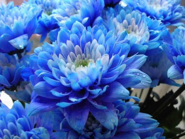 Fajne życzenia na Dzień Matki. Z takich życzeń mama się z pewnością ucieszy. Fajne wiersze dla mamy 25.05.19