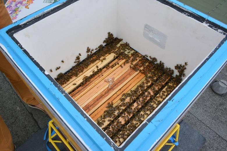 Wielki Dzień Pszczół w Świętokrzyskiem. Dlaczego warto je hodować?