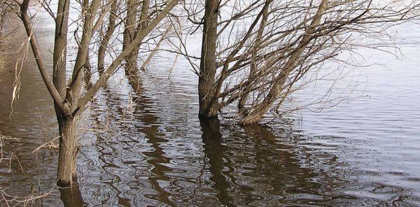 Poziom wody na rzece Bug ostatnio mocno wzrósł.