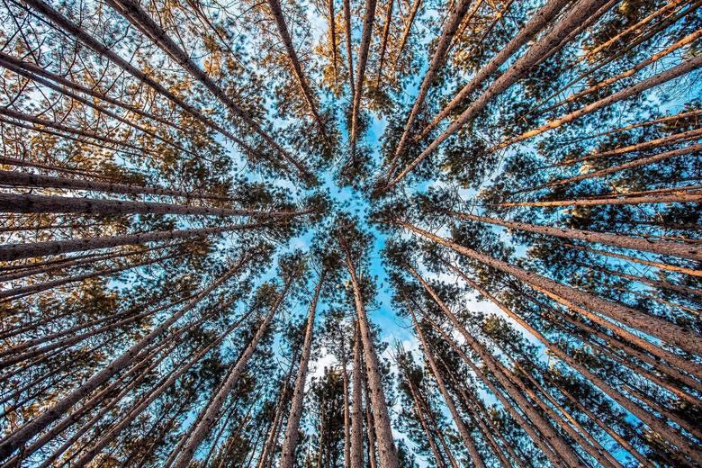 Drzewa mają swój internetDrzewa to nie tylko monumentalne, pojedyncze pnie, ale także skomplikowany podziemny system korzeniowy opleciony przez grzyby.