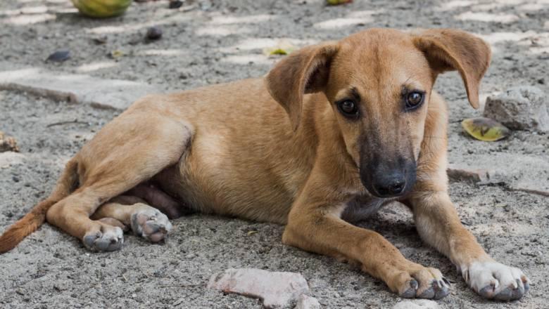 Chcesz pomóc, a możesz zaszkodzić. Jak nieświadomie krzywdzimy zwierzęta?