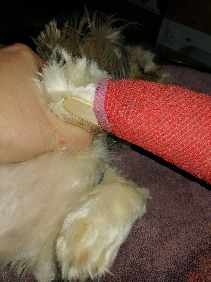 W 2015 roku hodowcom w Puszczykowie (powiat grodziski) odebrano 53 psy, które żyły w skrajnie złych warunkach. Choć jeden z nich otrzymał od sądu 10-letni zakaz posiadania zwierząt i prowadzenia związanej z tym działalności, nic sobie z tego nie zrobił. W ubiegłym tygodniu przeprowadzono kontrolę...