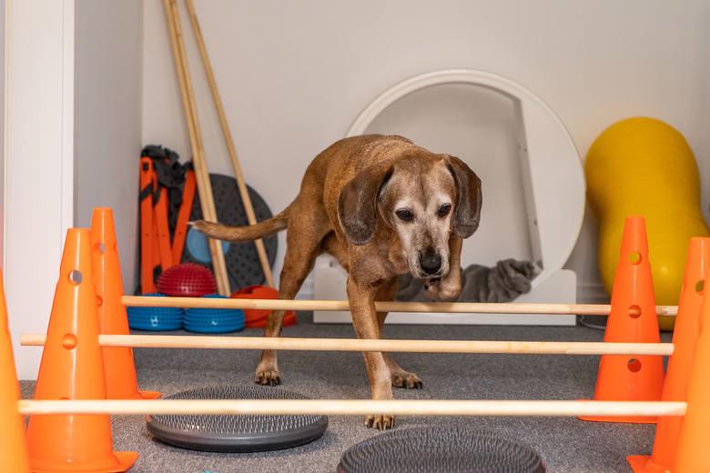 – Nadal bardzo mało osób wie, że istnieje coś takiego, jak rehabilitacja zwierząt, a jest to bardzo potrzebne, można zadbać o komfort życia zwierząt,