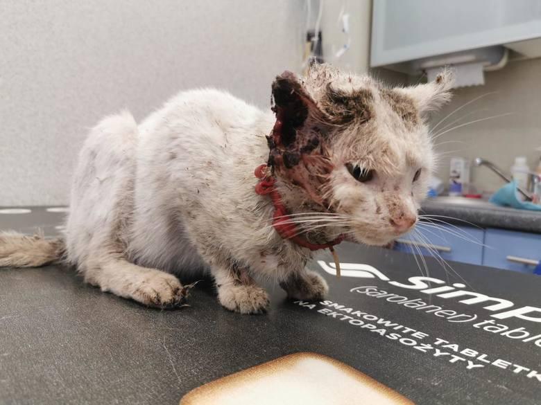 Zobacz, jak opolski TOZ ratuje zwierzęta.