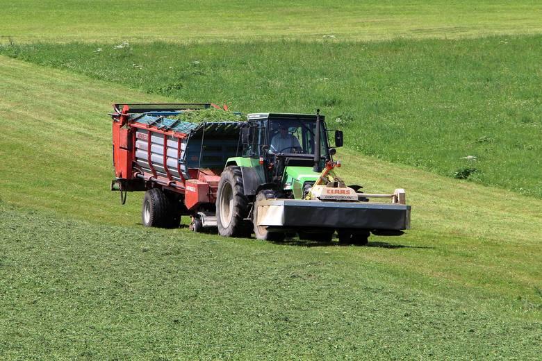 W wielu miejscach kraju rolnicy mają za sobą pierwszy pokos na łąkach. Tam, gdzie popadało, trawy dały zadowalający plon, dobrze zapowiada się także