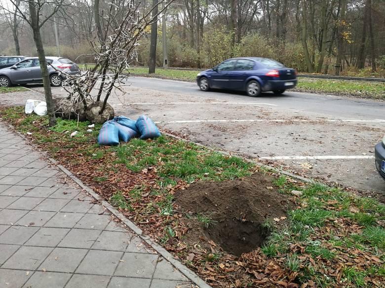 W poniedziałek wieczorem kobieta wyszła z psem na spacer na ul. Bydgoską. Ta część ulicy, od Sienkiewicza w stronę ul. Reja jest niedoświetlona. Dołów