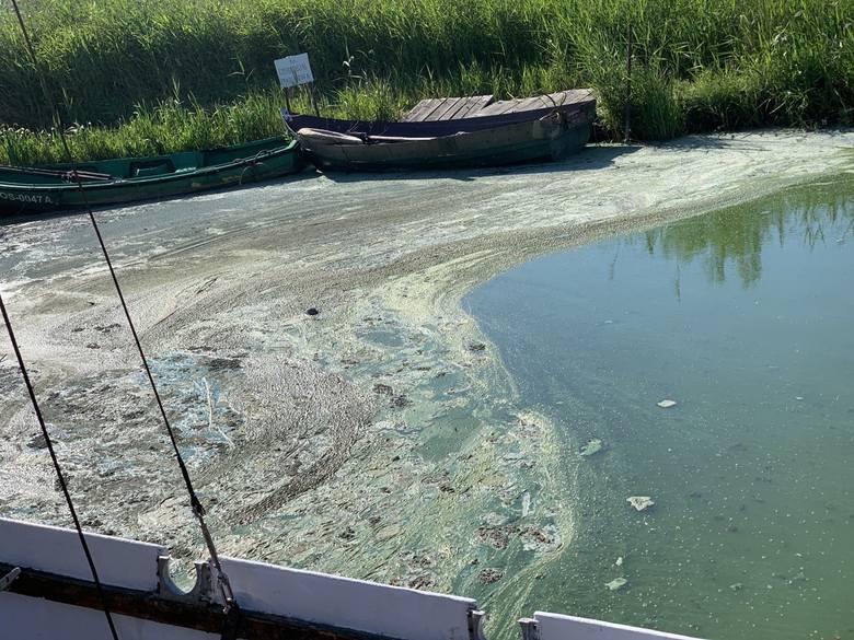 Południowy brzeg jeziora Jamno jest już niemal cały skażony dziwną, śmierdzącą substancją