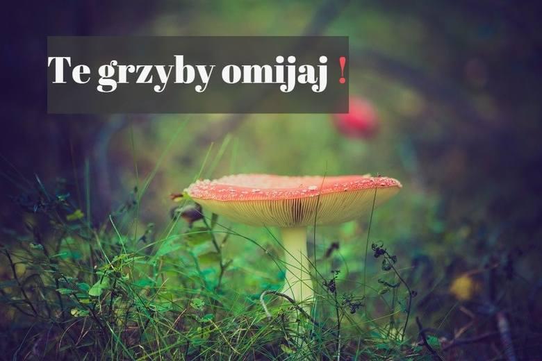 Niefrasobliwe zbieranie grzybów możesz przypłacić zdrowiem, a nawet życiem. A niestety, w lasach i na polanach wciąż słychać mity. Przykłady, których