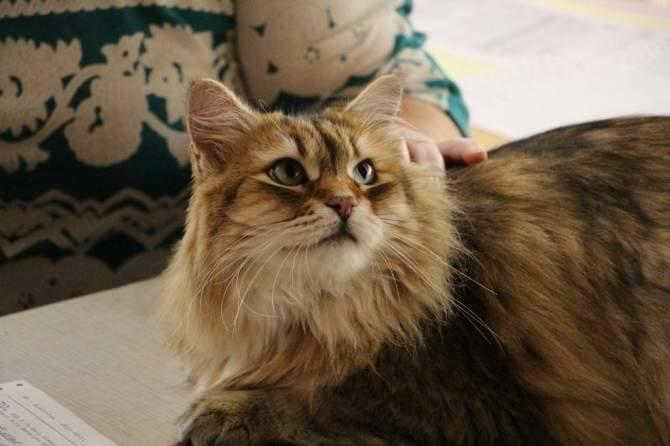 Obok polskich wystawców na miejscu pojawili się także miłośnicy kotów z Litwy Łotwy, Estonii czy Finlandii.