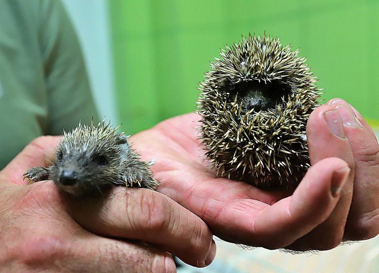 Wszystkie zwierzęta Ośrodka Rehabilitacji Dzikich Zwierząt w Łagiewnikach. Zobacz zdjęcia!