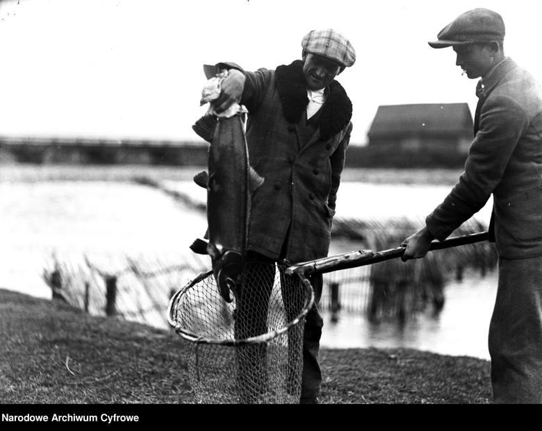 Wędkowanie na archiwalnych zdjęciach. Wędkowanie na archiwalnych zdjęciach. Wylęgarnia ryb łososiowatych w Nowym Targu - wyjmowanie sakiem złowionego