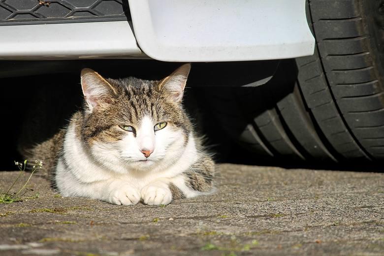 Potrącony kot leżał na drodze, nikt nie chciał pomóc