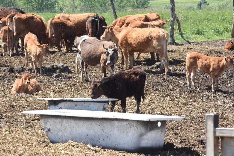 Właściciel hodowli zapewnia, że wszystko odbywa się zgodnie z przepisami