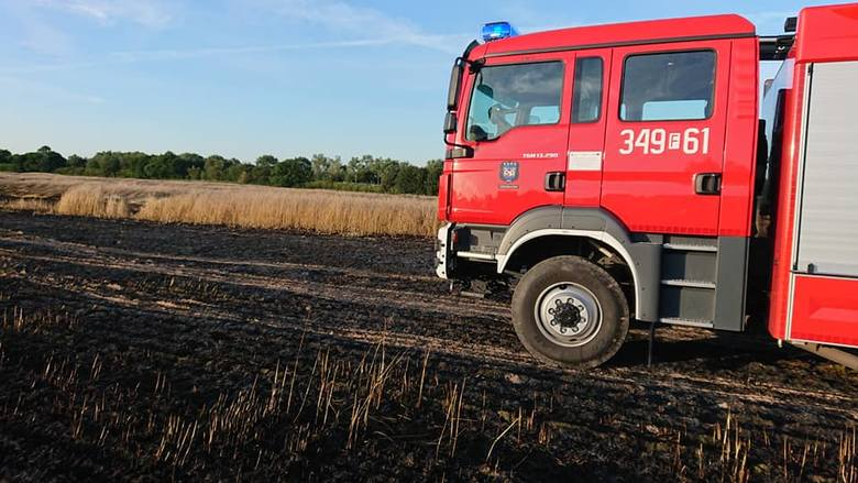 Potężny ogień! Strażacy walczyli z pożarem zboża we wsi Brzezie koło Sulechowa