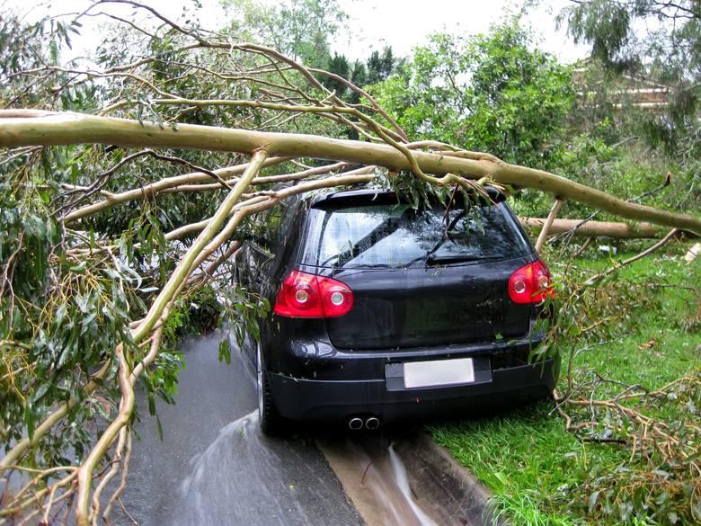 Wichura, która z niedzieli na poniedziałek dotrze również do Polski, może wyrządzić poważne szkody. Możemy spodziewać się uszkodzonych sieci energetycznych,