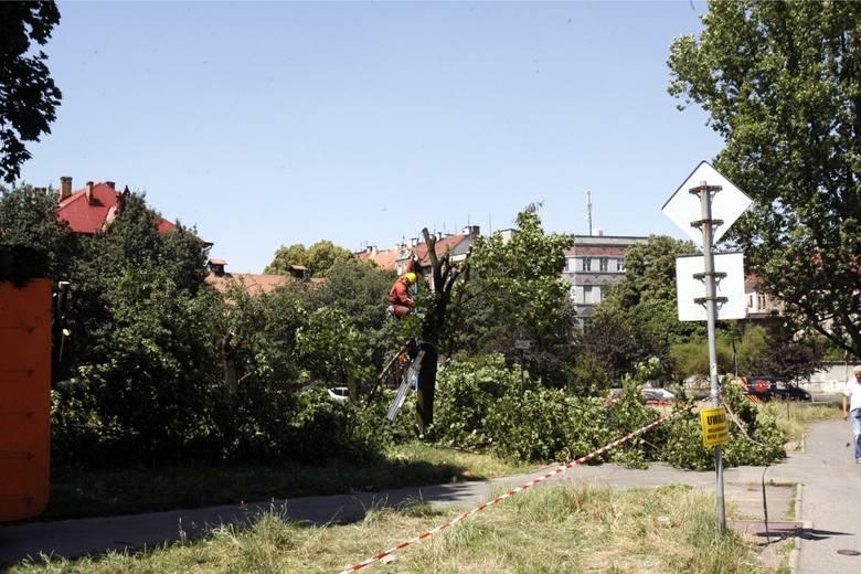 Prawo: Drzewa i krzewy do karczowania. Ministerstwo odpowiada