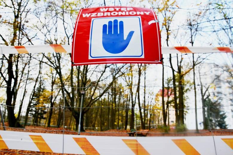 ZIELONA GÓRA: Park Piastowski już bez pomnika przyrody. Drzewo się przewróciło. Na szczęście nikomu nic się nie stało [ZDJĘCIA]