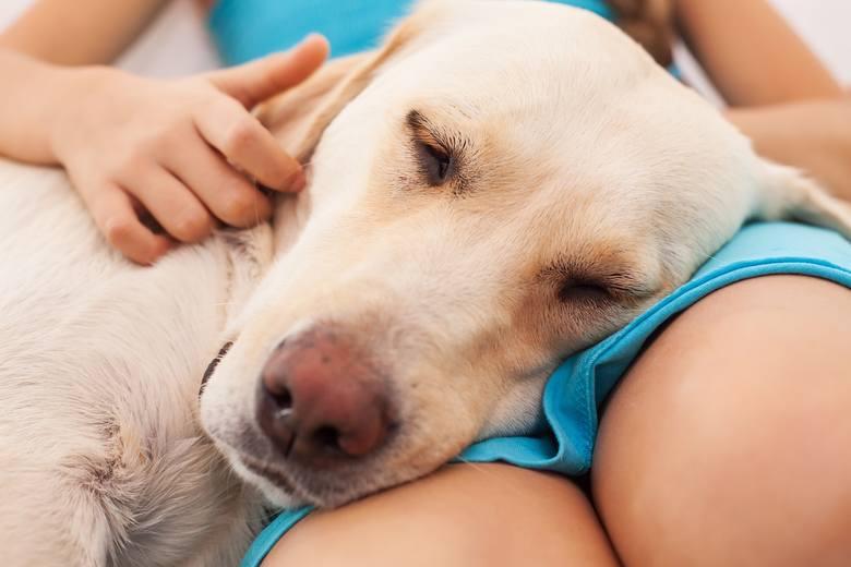 Słodkie oczy, miękka sierść i przyjazne usposobienie – kto nie ulegnie urokowi psa? Czworonożni towarzysze oferują nam swoją uwagę, empatię i towarzystwo,