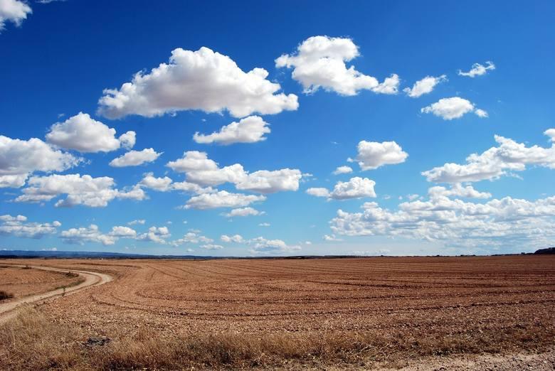 Użytkowanie gruntów rolnych w Opolskiem w 2019 r.: 545159 ha, w tym 424563 ha w rękach prywatnych. Z tego pod zasiewami: 472265 ha, w tym 361332 ha należących