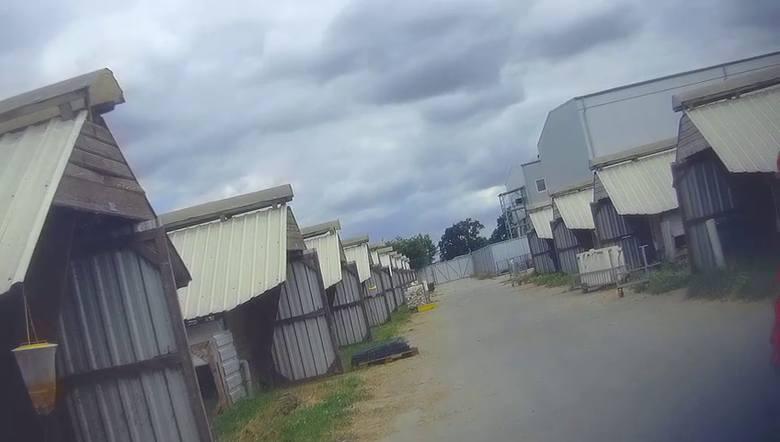 Zapis śledztwa z fermy norek w Góreczkach