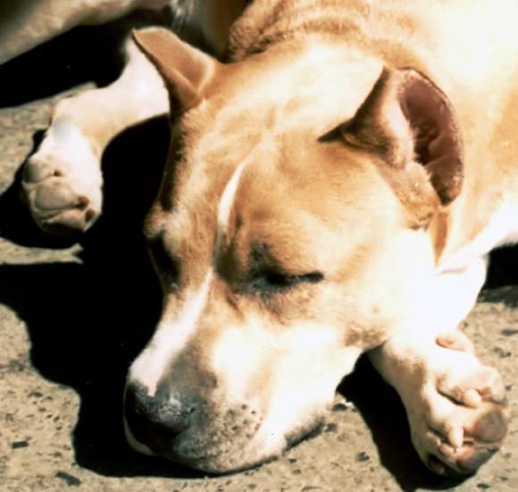 Kobieta za wszelką cenę chce się pozbyć swojego psa. Tym razem porzuciła go przy przeprawie promowej.