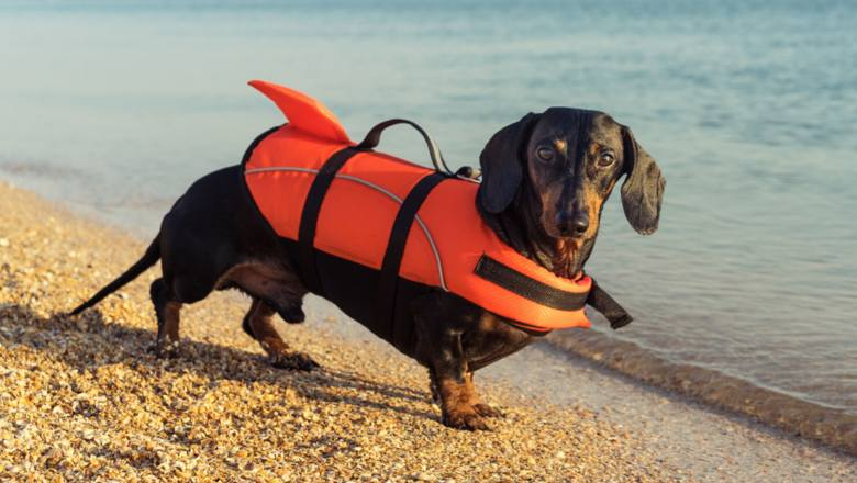 Jak zadbać o psa latem? Porady na upały i nie tylko