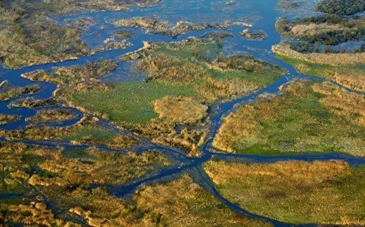 Rozlewiska Narwi w okolicach Topilca