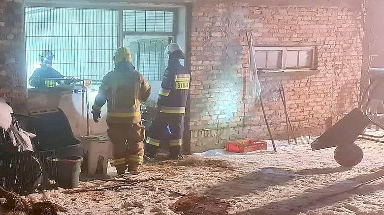 Dzięki błyskawicznej akcji strażaków uratowano życie pięciorga kangurków.