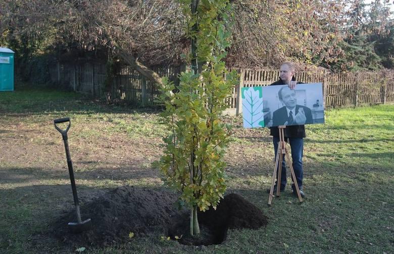 Zasadzili drzewka pamięci na Cmentarzu Centralnym
