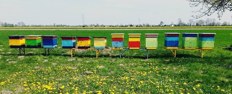 Rolnik wytruł pszczoły. Myślcie przy opryskach! - apeluje Tadeusz Stelmaszyk