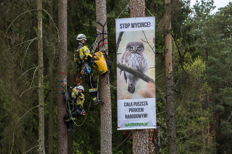 Bronią Puszczy jak Rospudy. Zablokowali wycinkę drzew