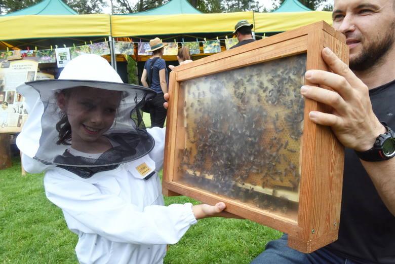 Zielona Góra. Pszczoły też mogą świętować. Ich dzień odbył się w zielonogórskim ogrodzie botanicznym. Co się tam działo? [ZDJĘCIA]