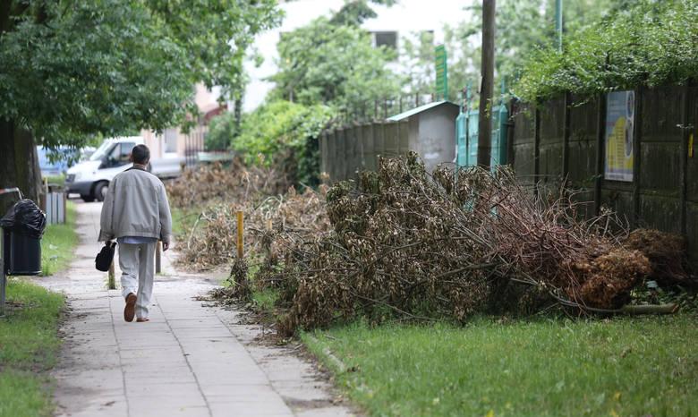 Wichury połamały wiele drzew na południu i na północy regionu. Strażacy usuwali je przez wiele godzin.