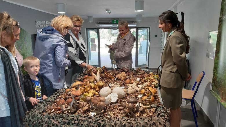 """Park Krajobrazowy """"Dolina Słupi"""" zorganizował w swojej siedzibie w Słupsku wystawę grzybów. Wystawa będzie czynna również niedzielę i poniedziałek (29-30"""