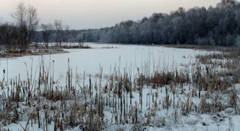Tęsknisz za śnieżną zimą i jej urokami? Zobacz, jak pięknie wyglądały zakątki Puszczy Kozienickiej w zimowej scenerii.>