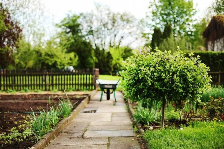 Pomysły Na Mały Ogród Ntopl
